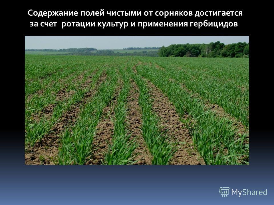 Содержание полей чистыми от сорняков достигается за счет ротации культур и применения гербицидов