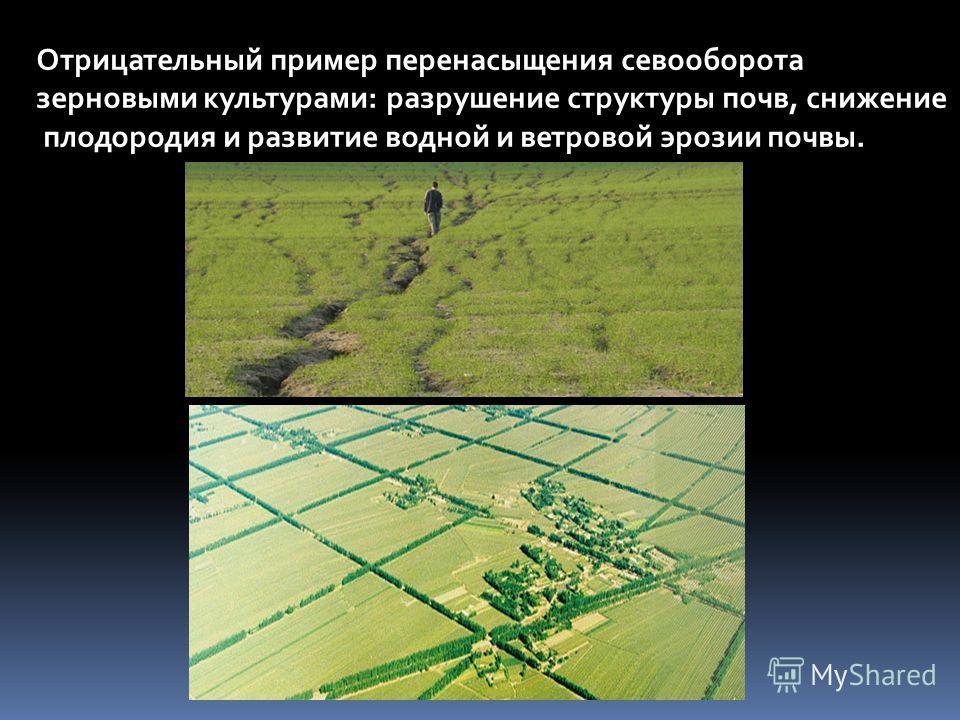 Отрицательный пример перенасыщения севооборота зерновыми культурами: разрушение структуры почв, снижение плодородия и развитие водной и ветровой эрозии почвы.
