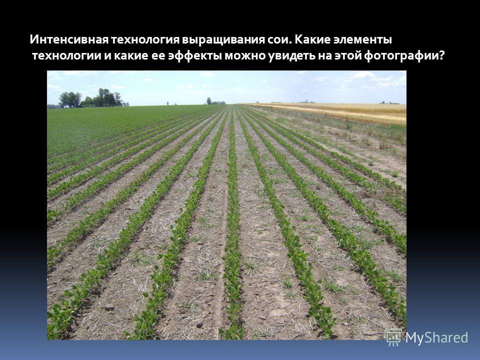 Интенсивная технология выращивания сои. Какие элементы технологии и какие ее эффекты можно увидеть на этой фотографии?