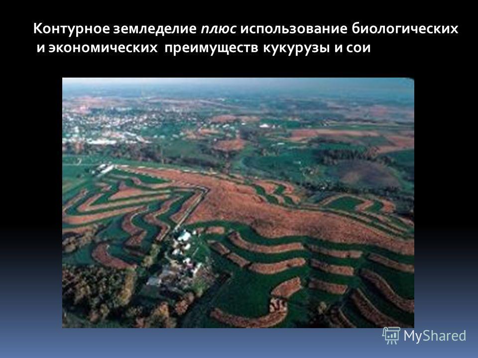 Контурное земледелие плюс использование биологических и экономических преимуществ кукурузы и сои