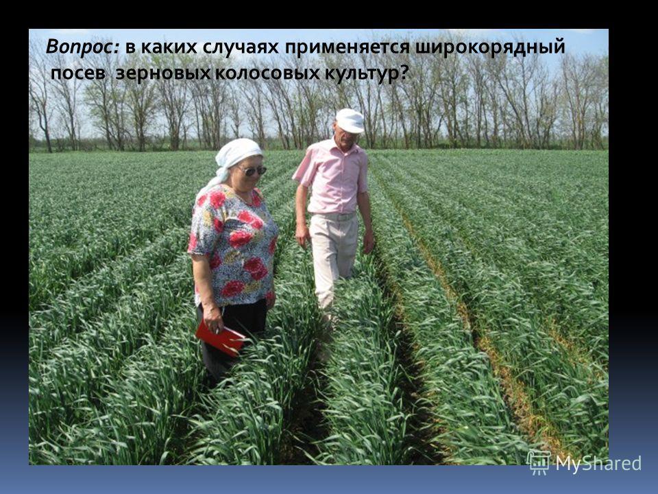 Вопрос: в каких случаях применяется широкорядный посев зерновых колосовых культур?