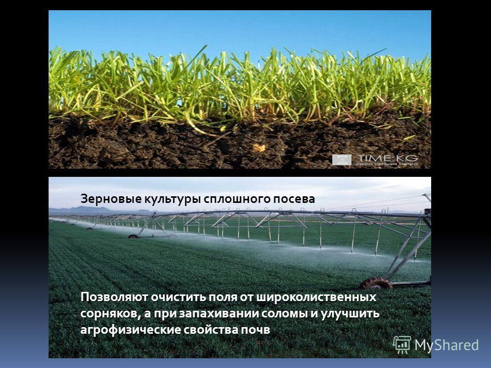 Зерновые культуры сплошного посева Позволяют очистить поля от широколиственных сорняков, а при запахивании соломы и улучшить агрофизические свойства почв