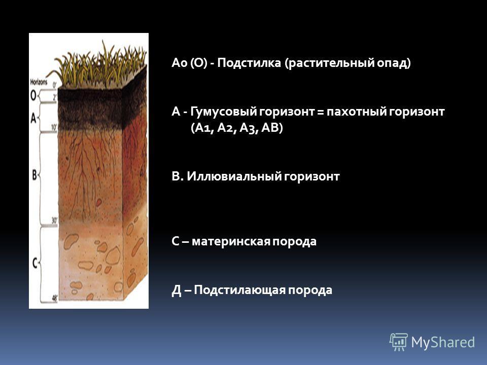 А0 (О) - Подстилка (растительный опад) А - Гумусовый горизонт = пахотный горизонт (А1, А2, А3, АВ) В. Иллювиальный горизонт С – материнская порода Д – Подстилающая порода