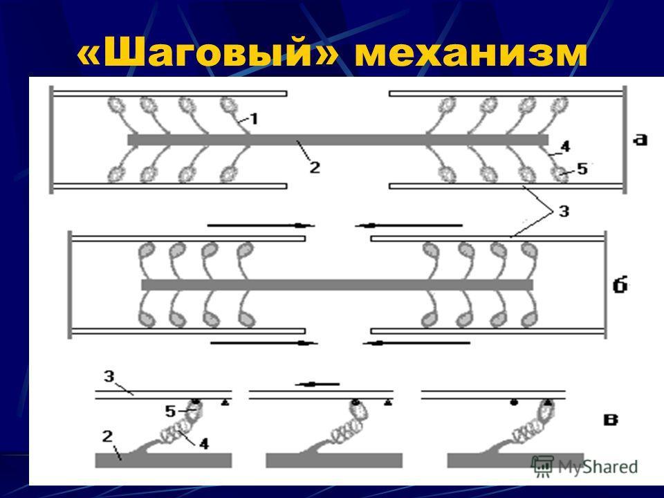 «Шаговый» механизм
