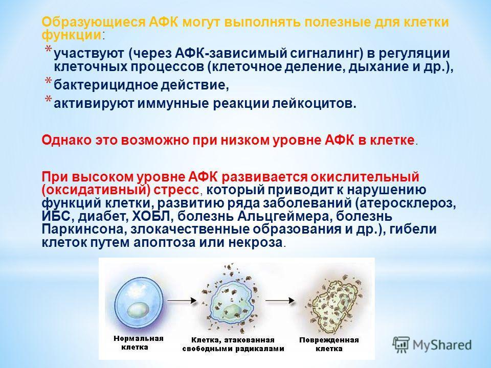 Образующиеся АФК могут выполнять полезные для клетки функции: * участвуют (через АФК-зависимый сигналинг) в регуляции клеточных процессов (клеточное деление, дыхание и др.), * бактерицидное действие, * активируют иммунные реакции лейкоцитов. Однако э