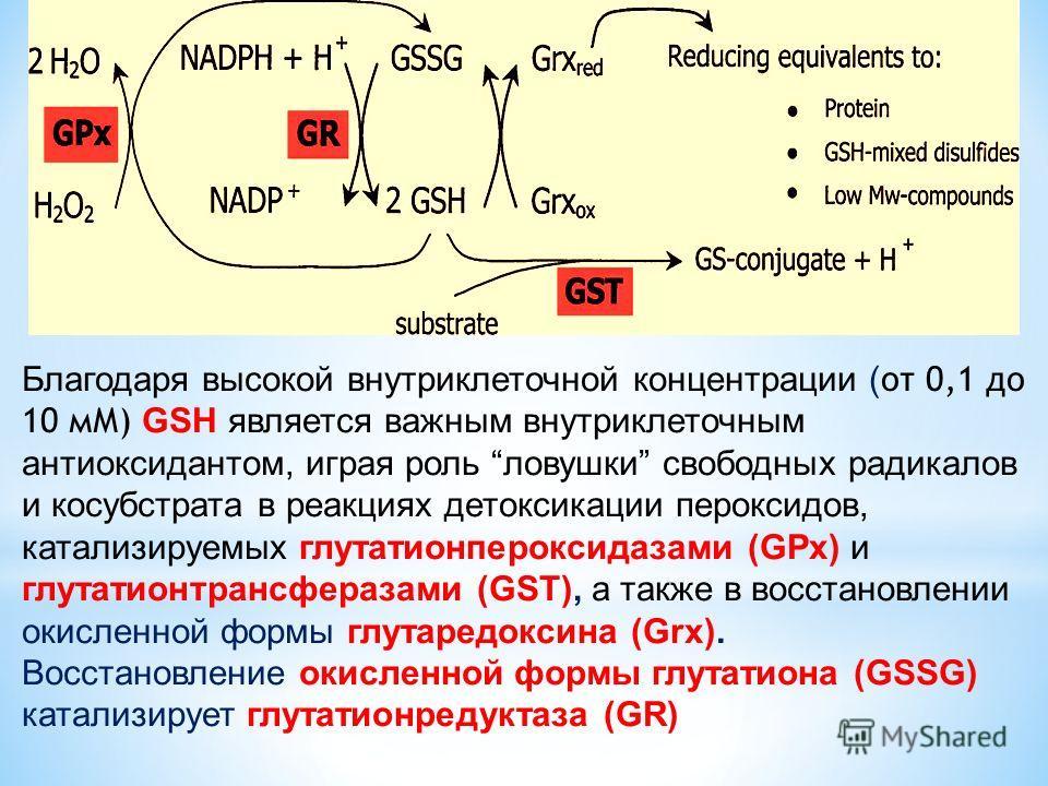 Благодаря высокой внутриклеточной концентрации ( от 0,1 до 10 мМ) GSH является важным внутриклеточным антиоксидантом, играя роль ловушки свободных радикалов и косубстрата в реакциях детоксикации пероксидов, катализируемых глутатионпероксидазами (GPx)
