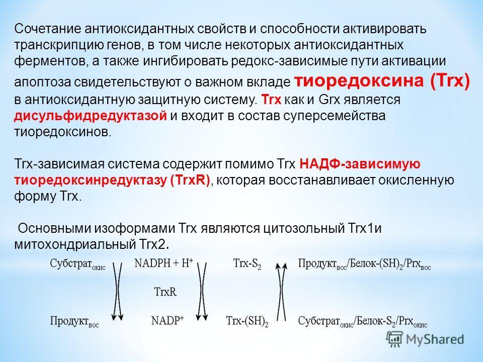Сочетание антиоксидантных свойств и способности активировать транскрипцию генов, в том числе некоторых антиоксидантных ферментов, а также ингибировать редокс-зависимые пути активации апоптоза свидетельствуют о важном вкладе тиоредоксина (Trx) в антио