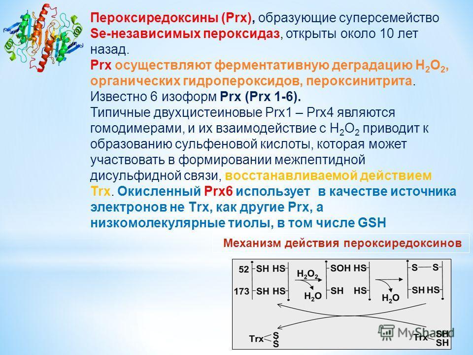 Механизм действия пероксиредоксинов Пероксиредоксины (Prx), образующие суперсемейство Se-независимых пероксидаз, открыты около 10 лет назад. Prx осуществляют ферментативную деградацию H 2 O 2, органических гидропероксидов, пероксинитрита. Известно 6