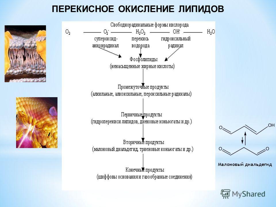 ПЕРЕКИСНОЕ ОКИСЛЕНИЕ ЛИПИДОВ Малоновый диальдегид