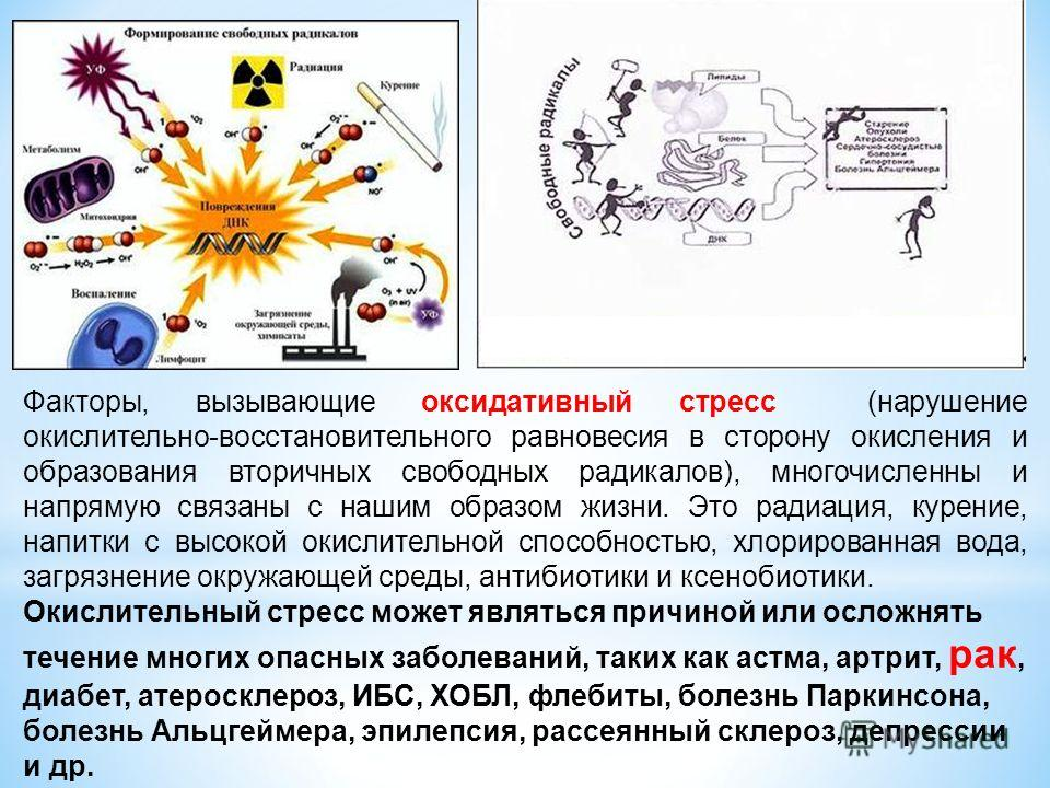 Факторы, вызывающие оксидативный стресс (нарушение окислительно-восстановительного равновесия в сторону окисления и образования вторичных свободных радикалов), многочисленны и напрямую связаны с нашим образом жизни. Это радиация, курение, напитки с в
