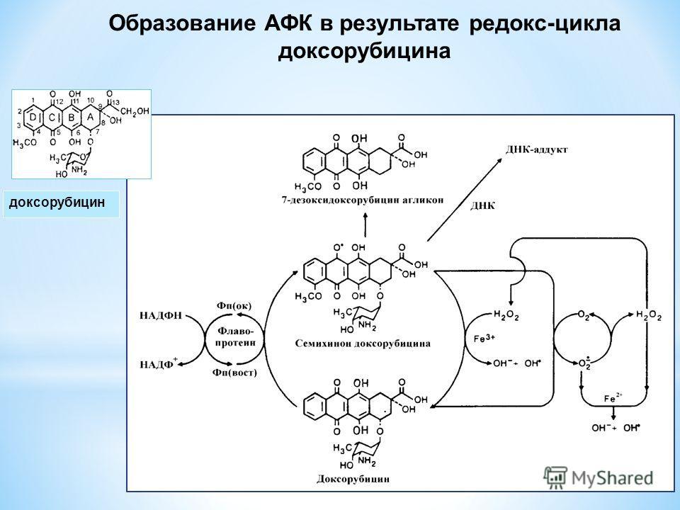 доксорубицин Образование АФК в результате редокс-цикла доксорубицина
