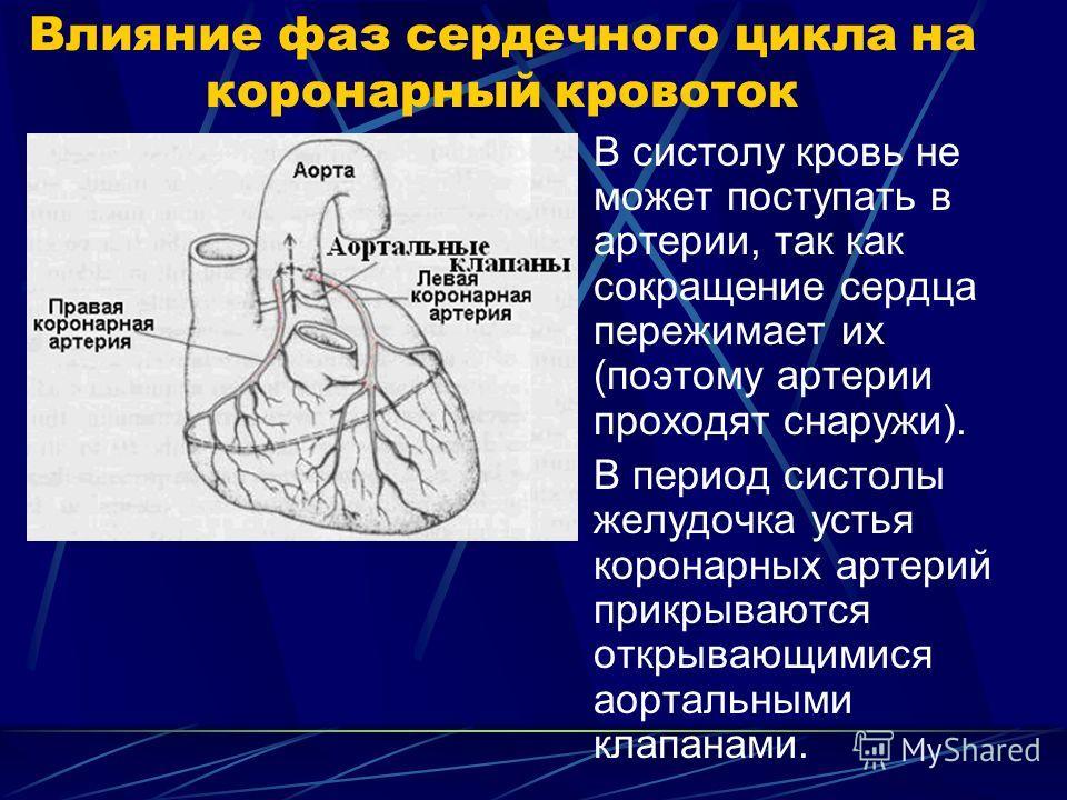 Влияние фаз сердечного цикла на коронарный кровоток В систолу кровь не может поступать в артерии, так как сокращение сердца пережимает их (поэтому артерии проходят снаружи). В период систолы желудочка устья коронарных артерий прикрываются открывающим
