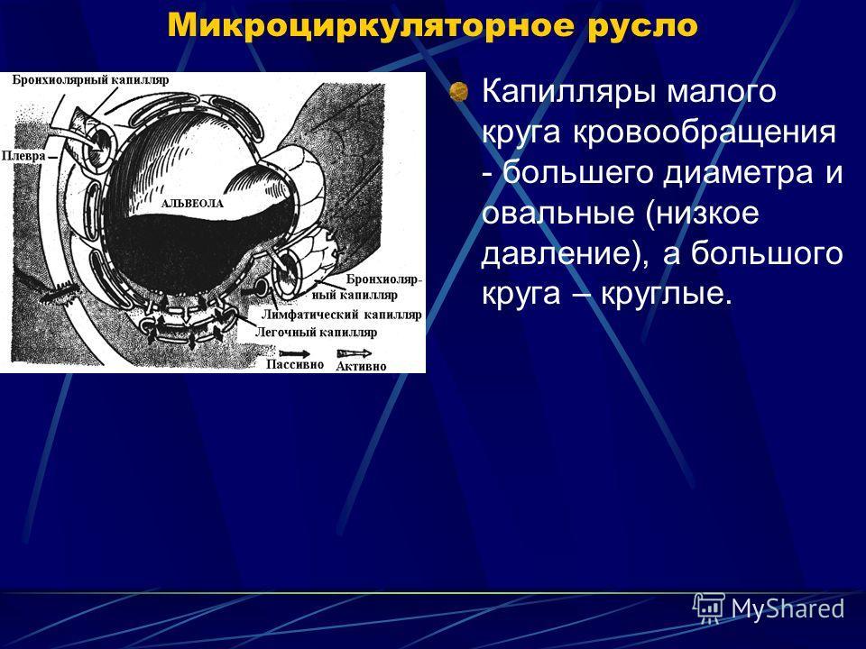 Микроциркуляторное русло Капилляры малого круга кровообращения - большего диаметра и овальные (низкое давление), а большого круга – круглые.