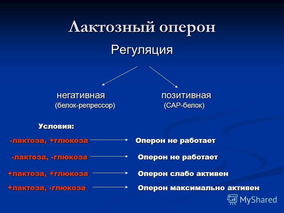 Лактозный оперон Регуляция негативная негативнаяпозитивная (белок-репрессор) (CAP-белок) Условия: -лактоза, +глюкоза Оперон не работает -лактоза, -глюкоза -лактоза, -глюкоза Оперон не работает +лактоза, +глюкоза +лактоза, +глюкоза Оперон слабо активе