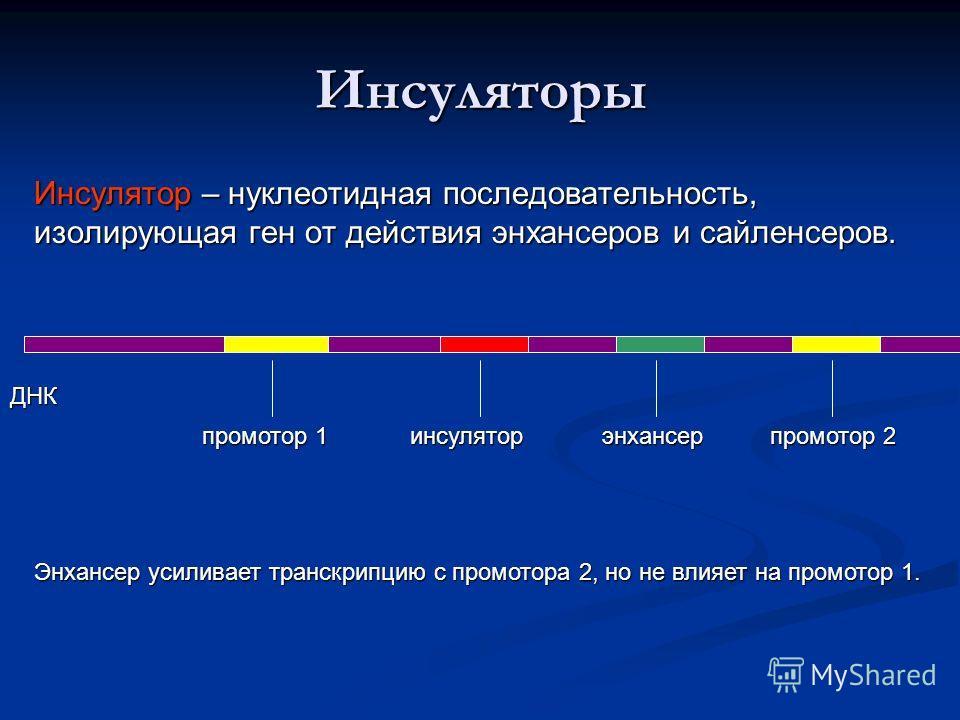 Инсуляторы Инсулятор – нуклеотидная последовательность, изолирующая ген от действия энхансеров и сайленсеров. ДНК промотор 1 промотор 2 энхансеринсулятор Энхансер усиливает транскрипцию с промотора 2, но не влияет на промотор 1.