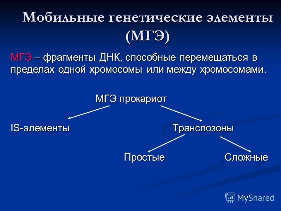 Мобильные генетические элементы (МГЭ) МГЭ – фрагменты ДНК, способные перемещаться в пределах одной хромосомы или между хромосомами. МГЭ прокариот МГЭ прокариот IS-элементы Транспозоны Простые Сложные Простые Сложные