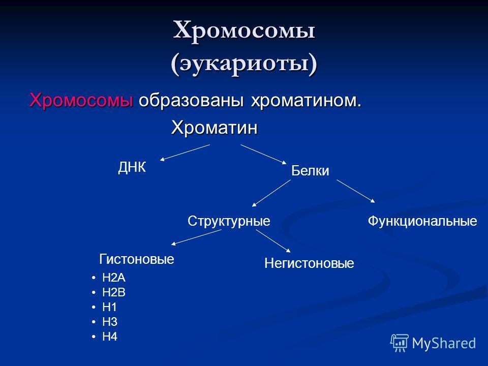 Хромосомы (эукариоты) Хромосомы образованы хроматином. Хроматин Хроматин ДНК Белки Гистоновые Негистоновые Н2А Н2В Н1 Н3 Н4 СтруктурныеФункциональные