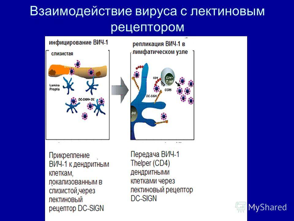 Взаимодействие вируса с лектиновым рецептором