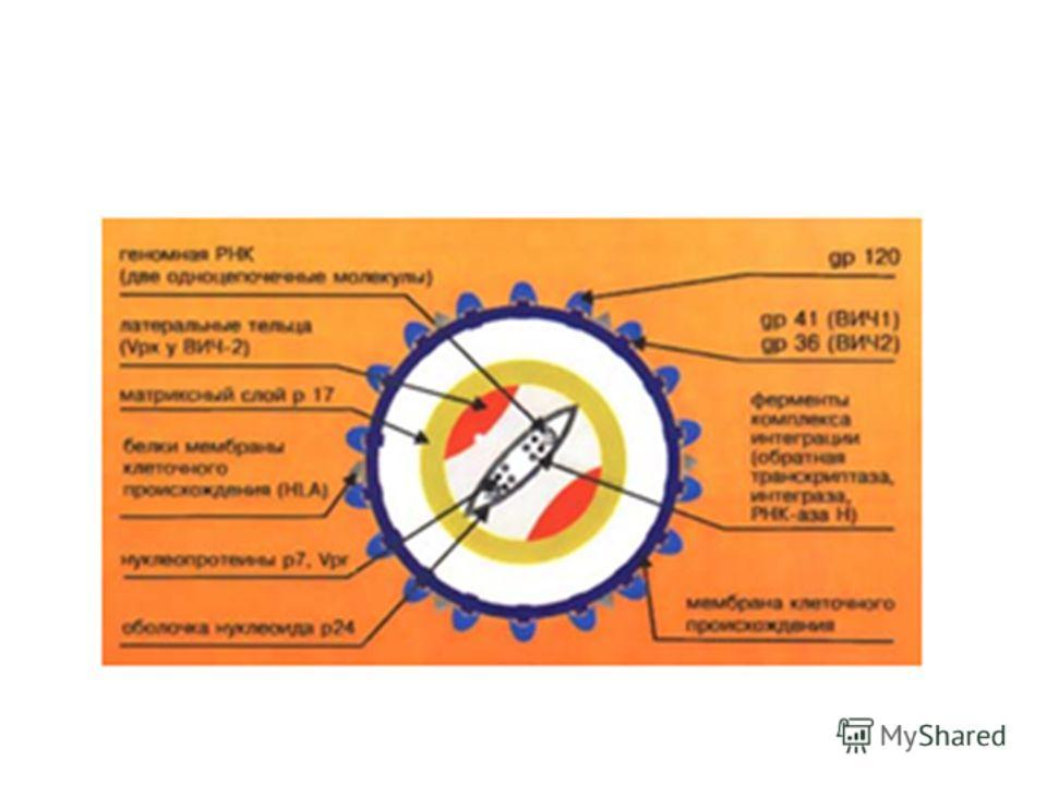 Лабораторная диагностика ВИЧ-инфекции