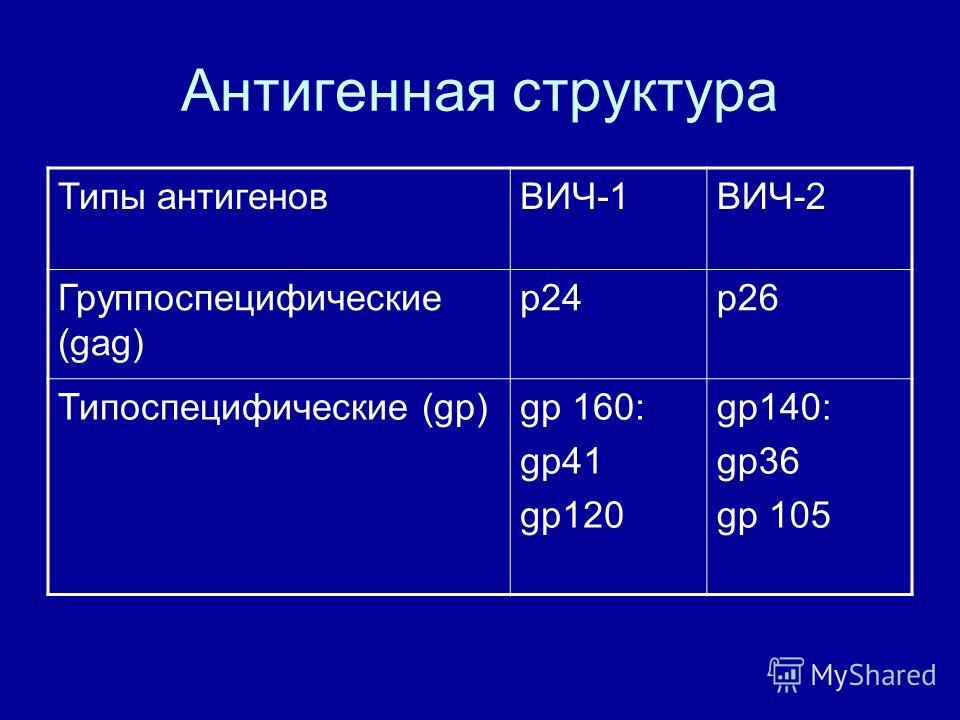 Антигенная структура Типы антигеновВИЧ-1ВИЧ-2 Группоспецифические (gag) p24p26 Типоспецифические (gp)gp 160: gp41 gp120 gp140: gp36 gp 105