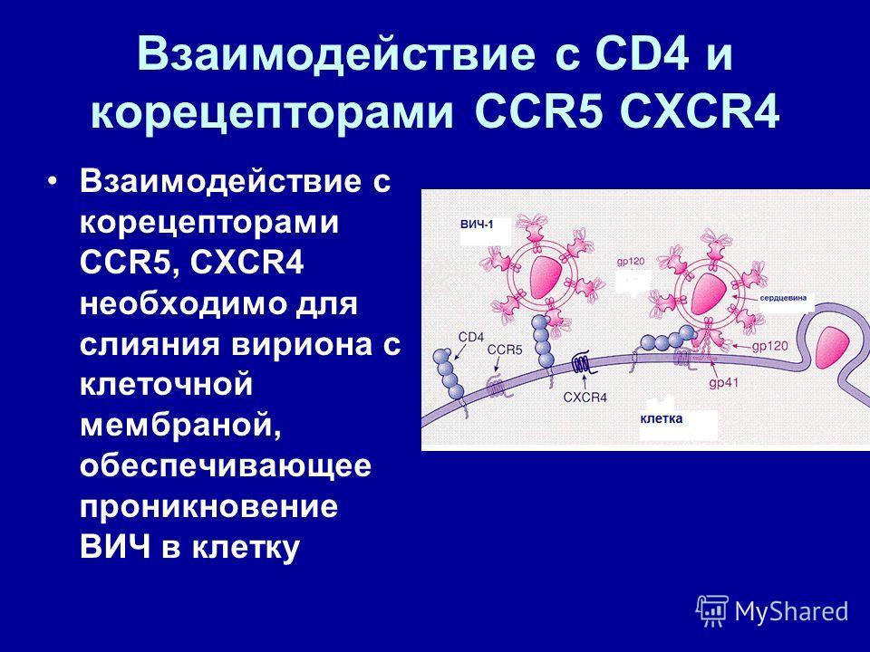 Взаимодействие с CD4 и корецепторами CCR5 CXCR4 Взаимодействие с корецепторами CCR5, CXCR4 необходимо для слияния вириона с клеточной мембраной, обеспечивающее проникновение ВИЧ в клетку