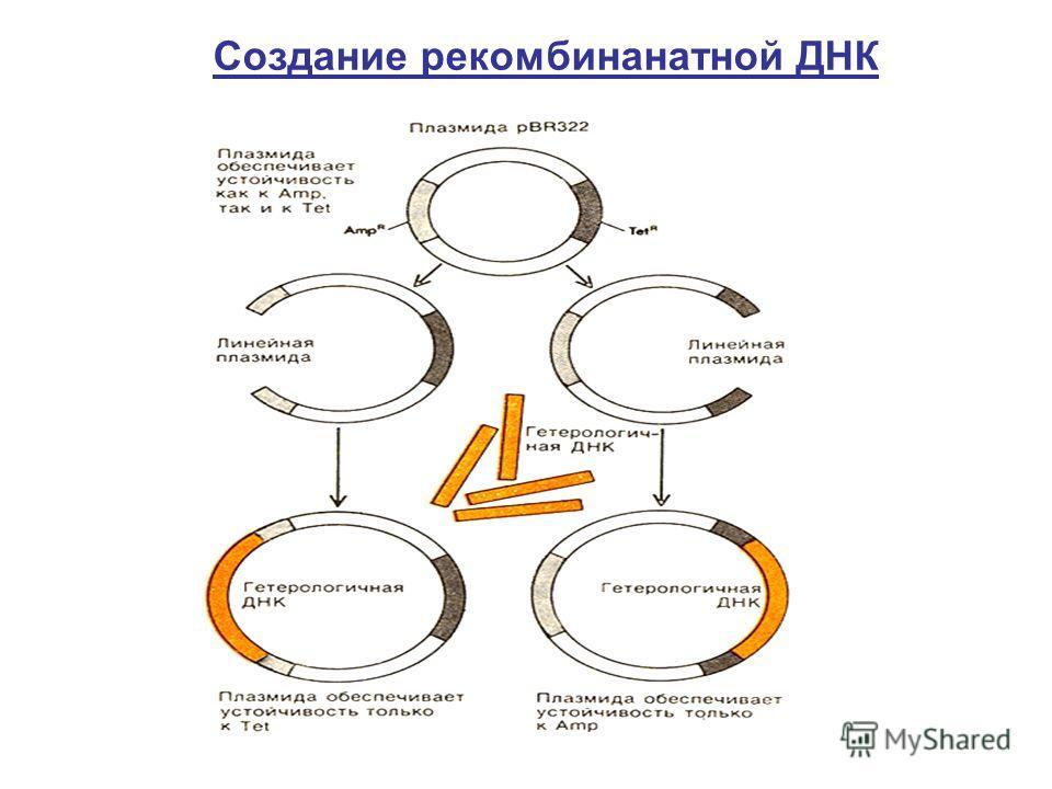 Создание рекомбинанатной ДНК