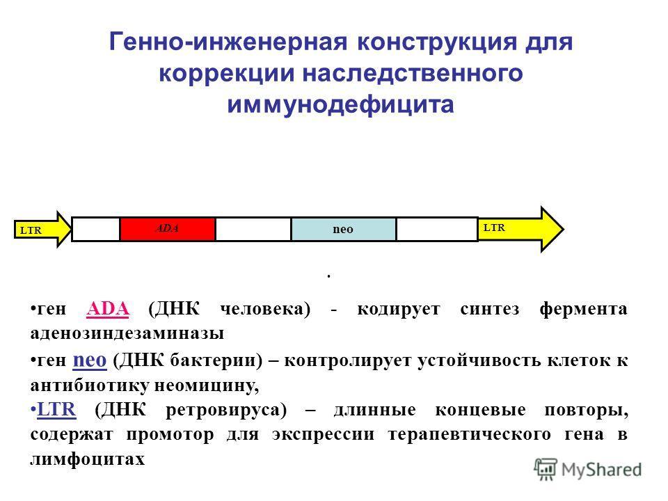 Генно-инженерная конструкция для коррекции наследственного иммунодефицита LTR ADA neo ген ADA (ДНК человека) - кодирует синтез фермента аденозиндезаминазы ген neo (ДНК бактерии) – контролирует устойчивость клеток к антибиотику неомицину, LTR (ДНК рет