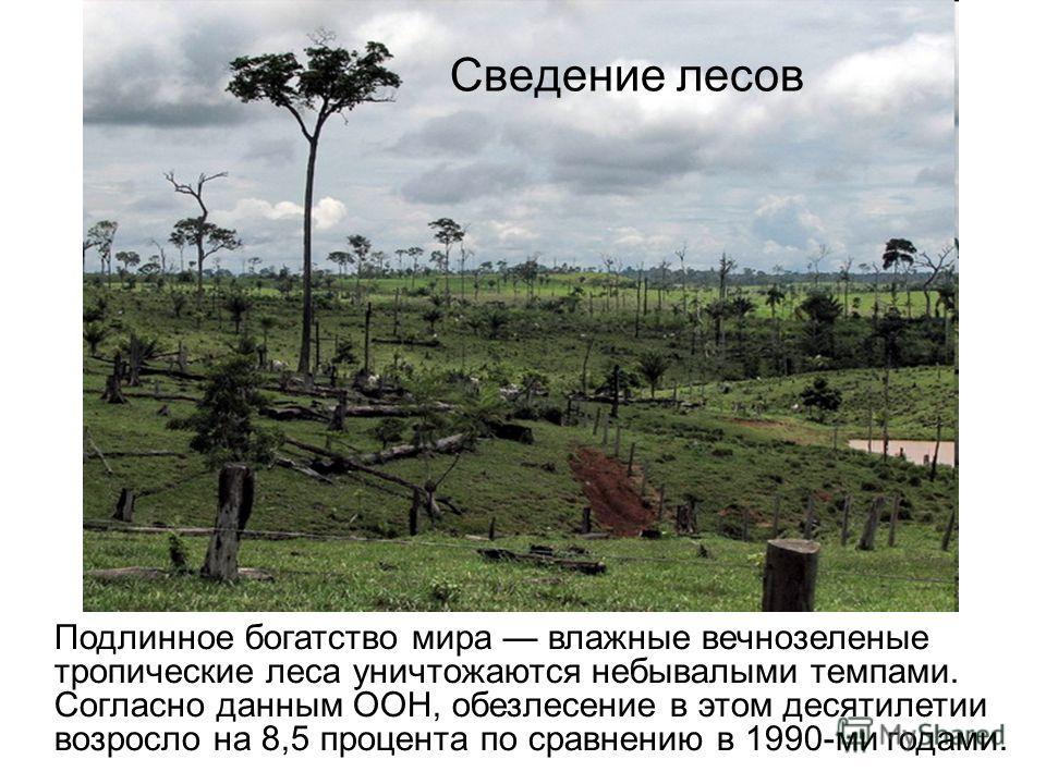 Сведение лесов Подлинное богатство мира влажные вечнозеленые тропические леса уничтожаются небывалыми темпами. Согласно данным ООН, обезлесение в этом десятилетии возросло на 8,5 процента по сравнению в 1990-ми годами.