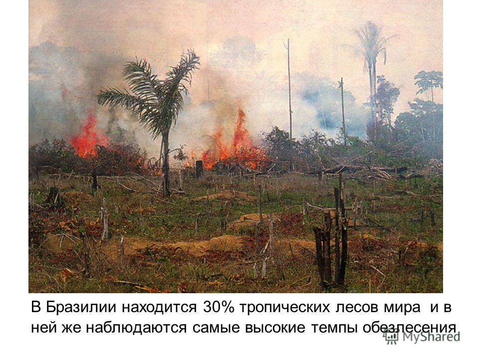 В Бразилии находится 30% тропических лесов мира и в ней же наблюдаются самые высокие темпы обезлесения
