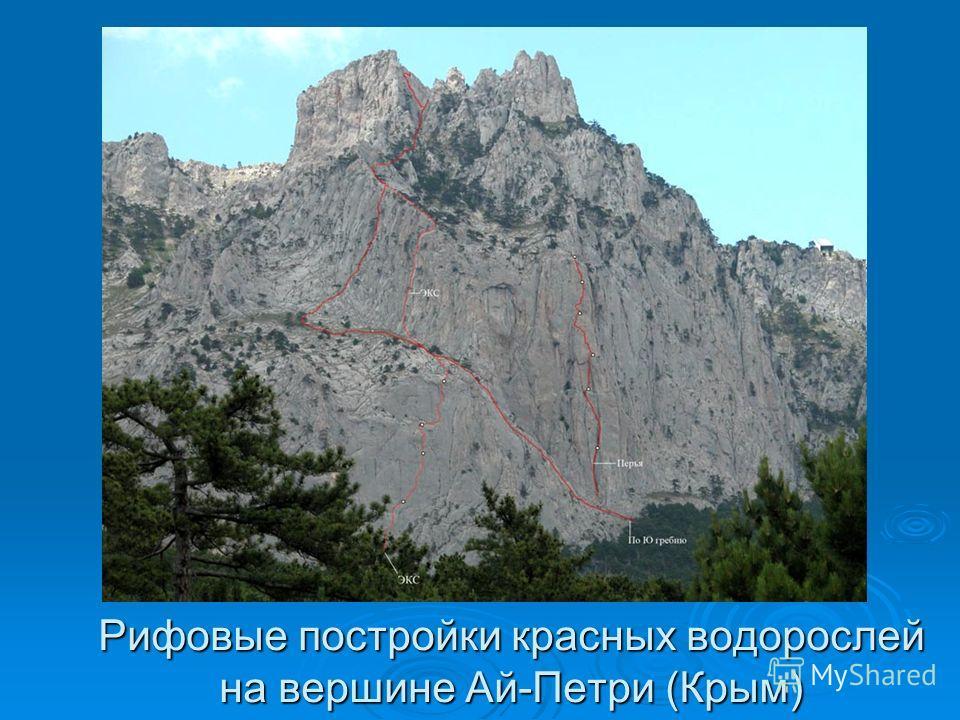 Рифовые постройки красных водорослей на вершине Ай-Петри (Крым)