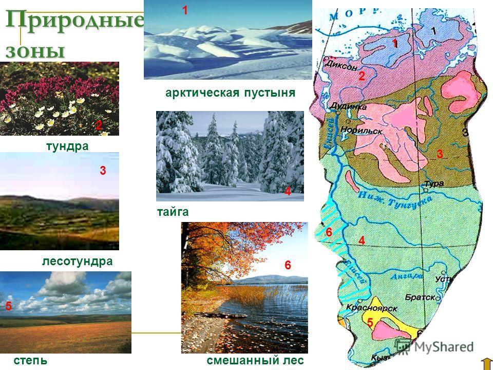 Природные зоны 2 1 3 4 5 1 2 4 5 6 6 3 степьсмешанный лес тундра лесотундра арктическая пустыня тайга