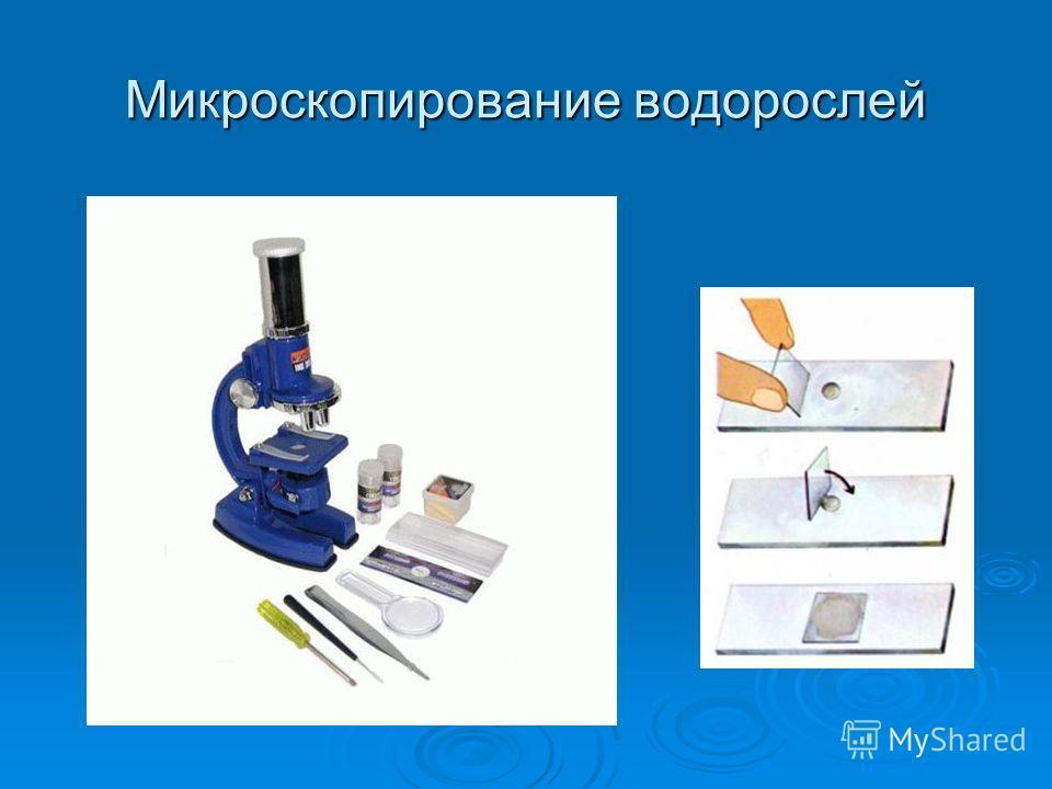 Микроскопирование водорослей