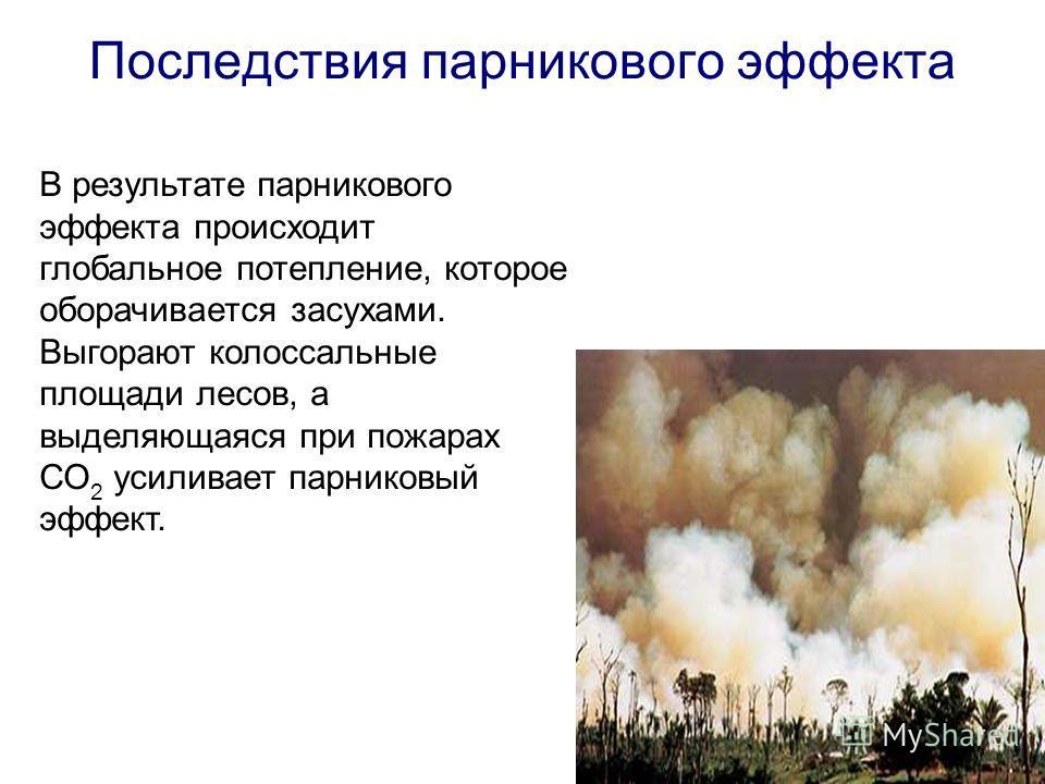 Последствия парникового эффекта В результате парникового эффекта происходит глобальное потепление, которое оборачивается засухами. Выгорают колоссальные площади лесов, а выделяющаяся при пожарах СО 2 усиливает парниковый эффект.