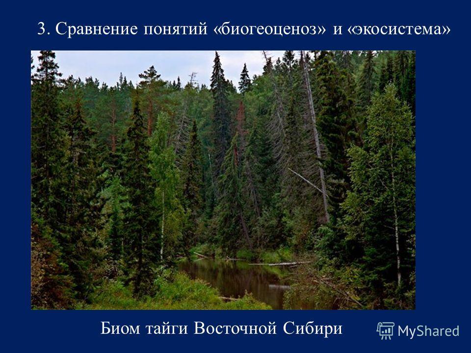 3. Сравнение понятий «биогеоценоз» и «экосистема» Биом тайги Восточной Сибири