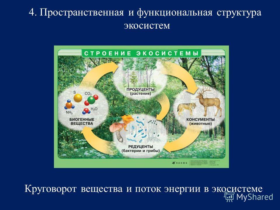 4. Пространственная и функциональная структура экосистем Круговорот вещества и поток энергии в экосистеме