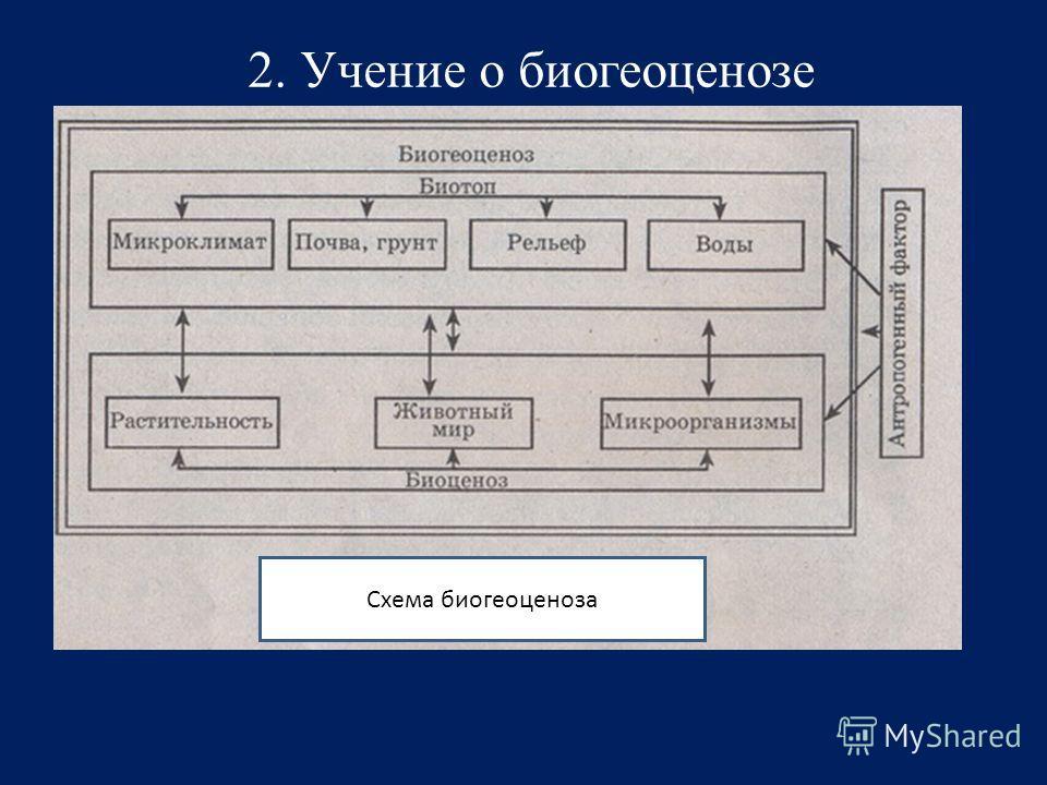 Схема биогеоценоза 2. Учение о биогеоценозе