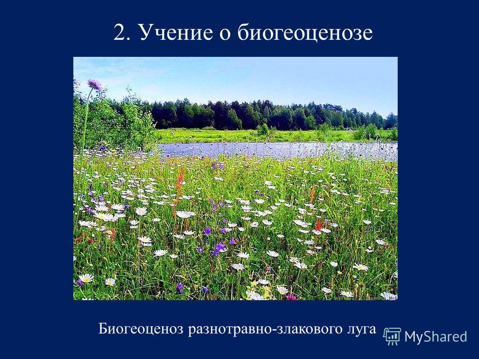 2. Учение о биогеоценозе Биогеоценоз разнотравно-злакового луга