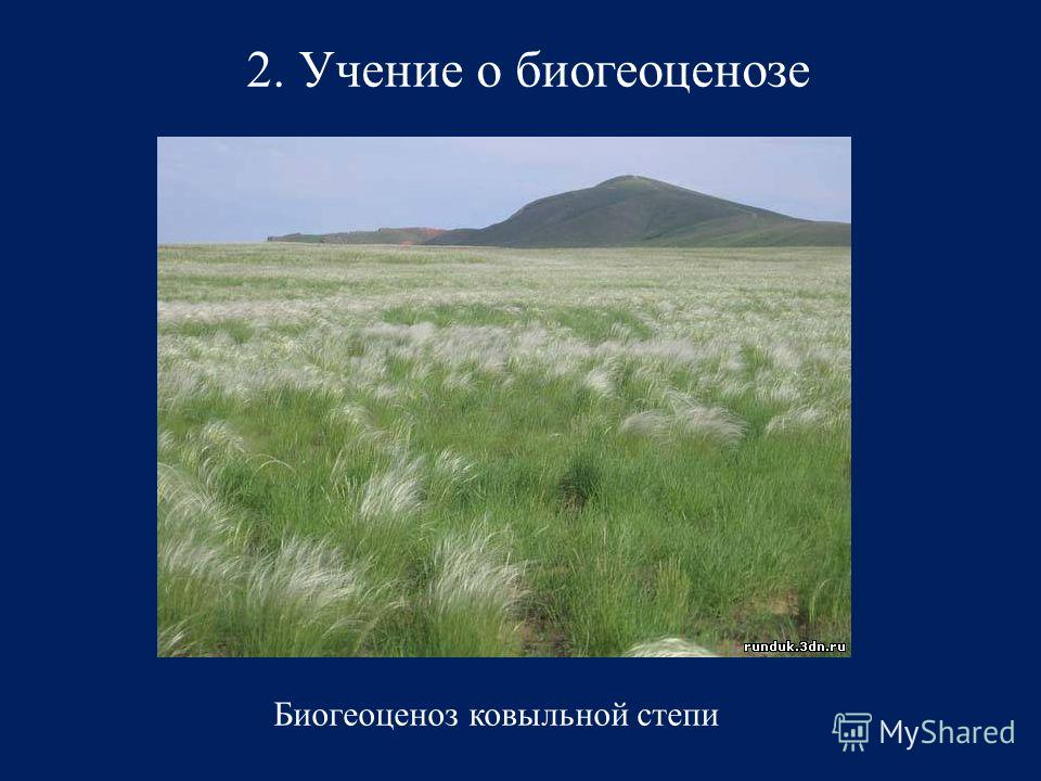 2. Учение о биогеоценозе Биогеоценоз ковыльной степи