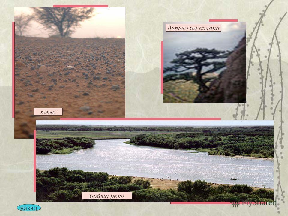 почва пойма реки дерево на склоне назад