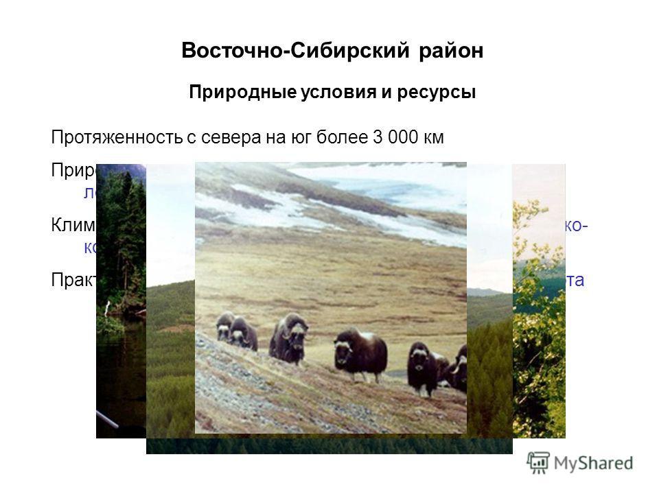 Восточно-Сибирский район Протяженность с севера на юг более 3 000 км Природные зоны: холодные арктические пустыни, тундра, лесотундра, тайга, лесостепи, степи, полупустыни Климат арктический, субарктический, континентальный, резко- континентальный Пр