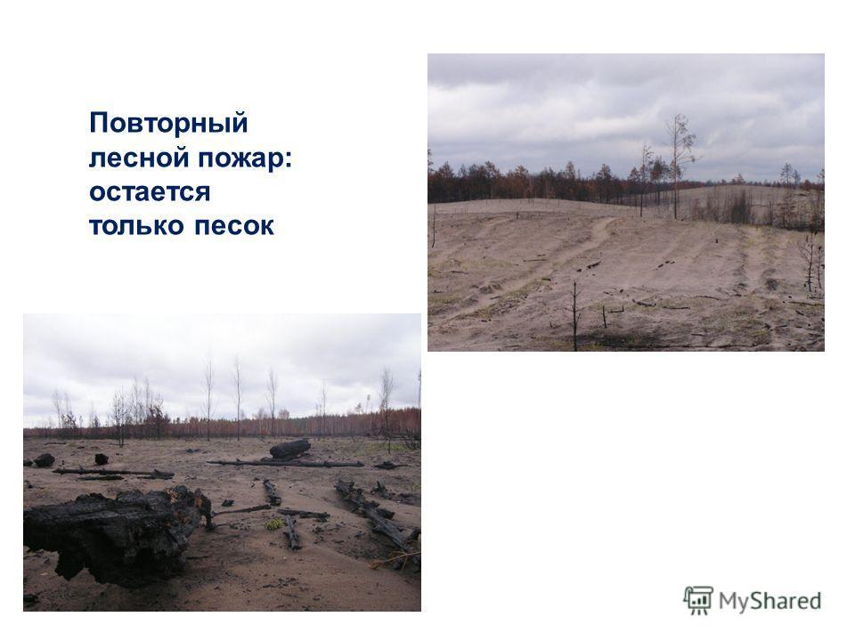 Повторный лесной пожар: остается только песок