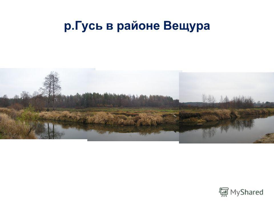 р.Гусь в районе Вещура