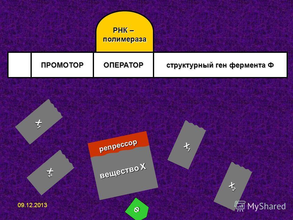 ПРОМОТОРОПЕРАТОР структурный ген фермента Ф РНК – полимераза репрессор вещество Х Ф Х1Х1Х1Х1 Х2Х2Х2Х2 Х1Х1Х1Х1 Х2Х2Х2Х2 09.12.2013