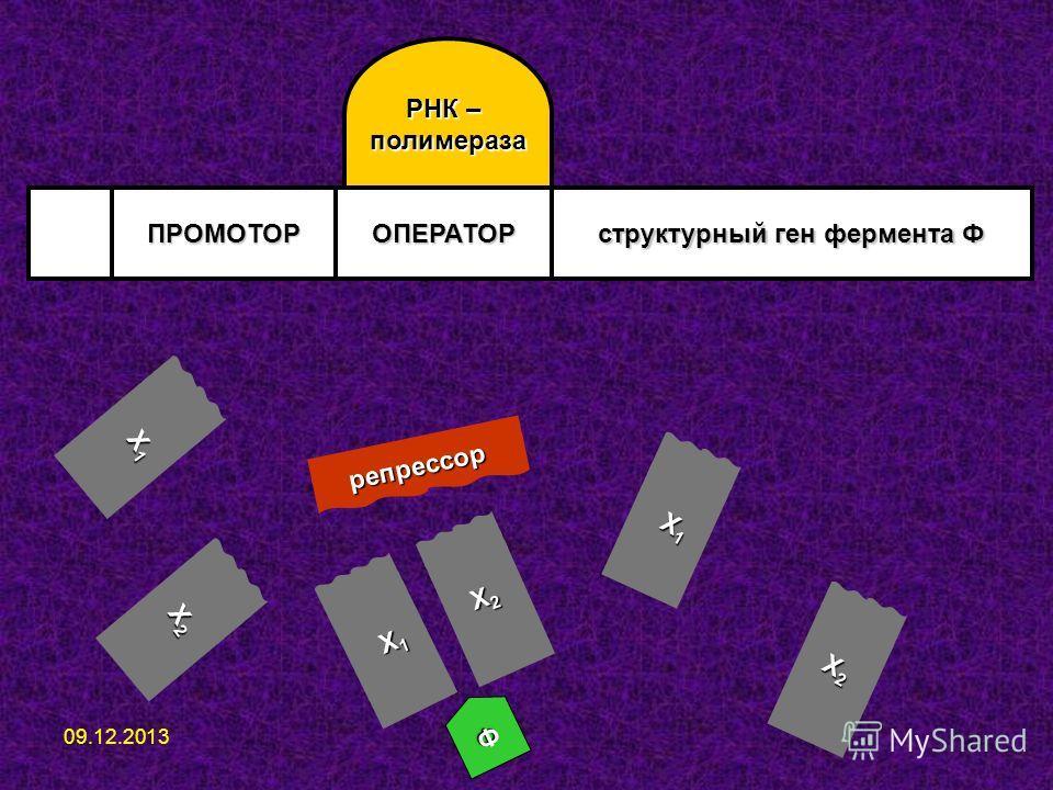 ПРОМОТОРОПЕРАТОР структурный ген фермента Ф РНК – полимераза репрессор Ф Х1Х1Х1Х1 Х2Х2Х2Х2 Х1Х1Х1Х1 Х2Х2Х2Х2 Х1Х1Х1Х1 Х2Х2Х2Х2 09.12.2013