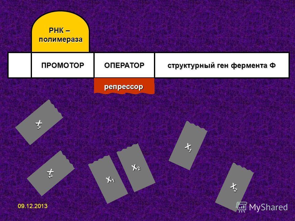ПРОМОТОРОПЕРАТОР структурный ген фермента Ф РНК – полимераза репрессор Х1Х1Х1Х1 Х2Х2Х2Х2 Х1Х1Х1Х1 Х2Х2Х2Х2 Х1Х1Х1Х1 Х2Х2Х2Х2 09.12.2013