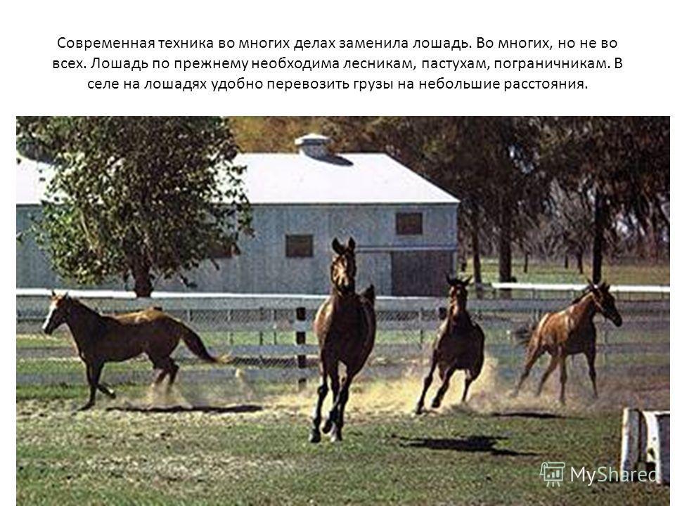 Современная техника во многих делах заменила лошадь. Во многих, но не во всех. Лошадь по прежнему необходима лесникам, пастухам, пограничникам. В селе на лошадях удобно перевозить грузы на небольшие расстояния.