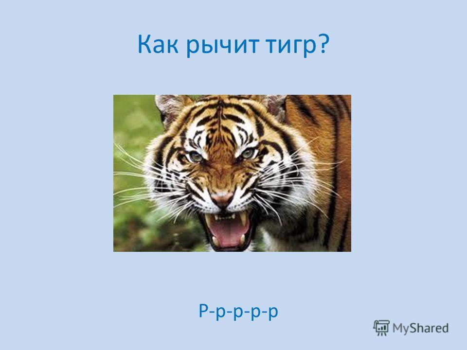 Как рычит тигр? Р-р-р-р-р