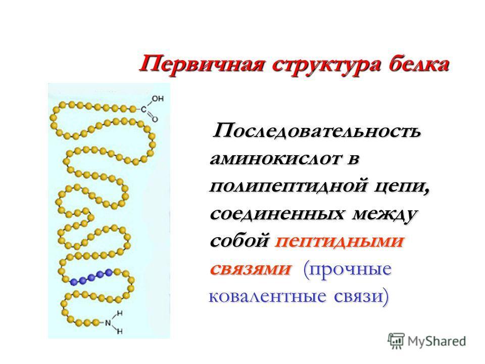 Первичная структура белка Последовательность аминокислот в полипептидной цепи, соединенных между собой пептидными связями (прочные ковалентные связи) Последовательность аминокислот в полипептидной цепи, соединенных между собой пептидными связями (про