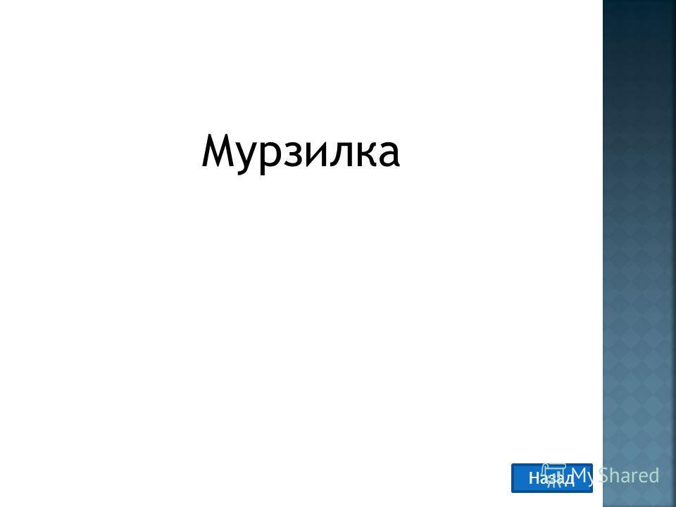 Мурзилка Назад