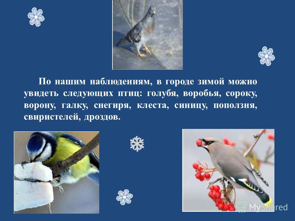 По нашим наблюдениям, в городе зимой можно увидеть следующих птиц: голубя, воробья, сороку, ворону, галку, снегиря, клеста, синицу, поползня, свиристелей, дроздов.